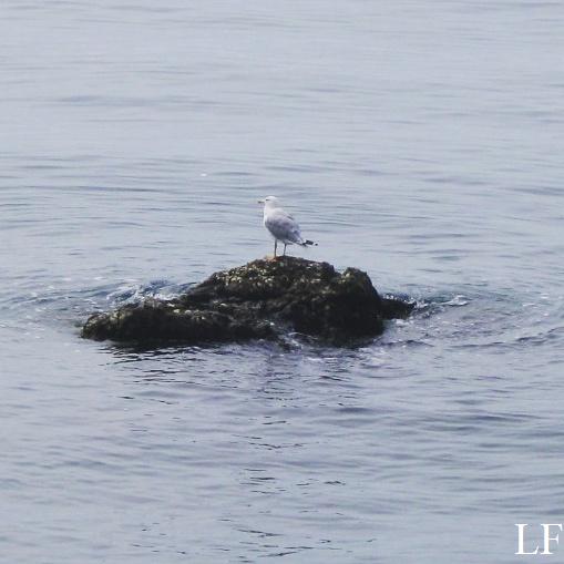 Seagull in Triest