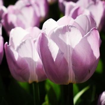 Spring_12