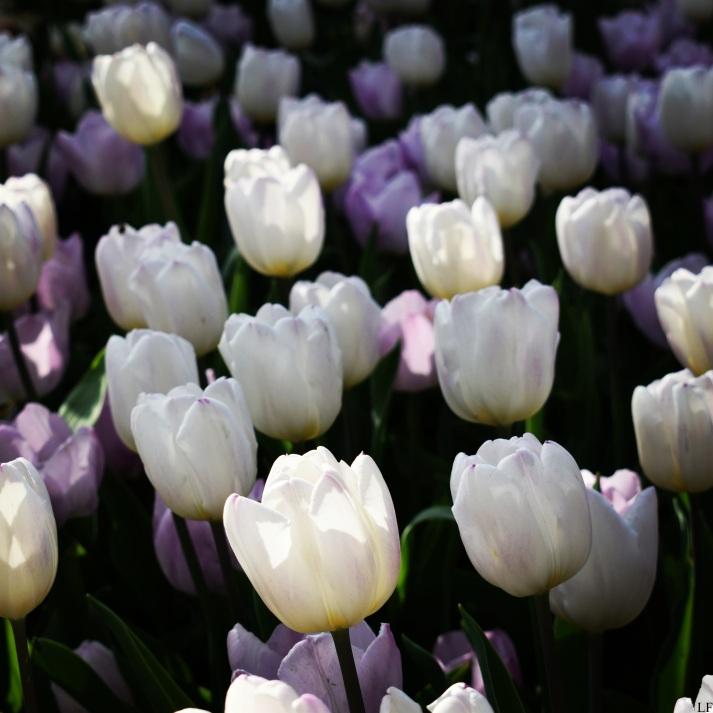 Spring_14