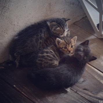 Kittens in the Church of St. Donat in Zadar